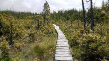 Hiking Boardwalk, West Coast Trail